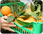 frutta abruzzo