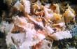 pastacicoriazucca