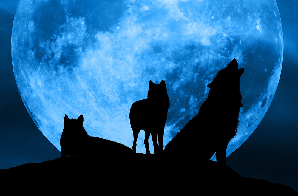 blue-moon-werewolves