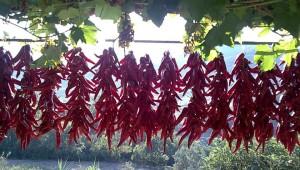 peperone dolce a seccare