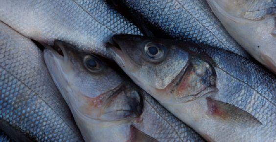 pescato