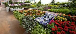 piante_interno