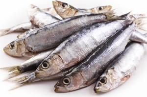 pesce azzurro per locandina conad